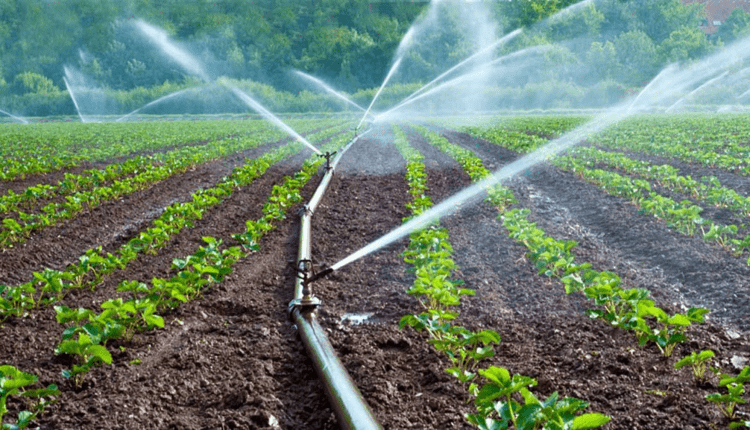 Buhari commits to developing irrigation to boost agricultural output