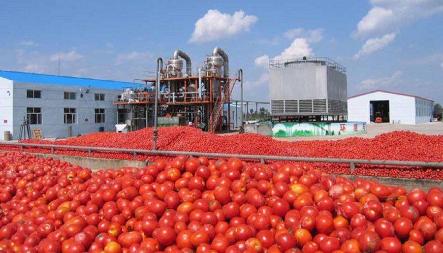 Dangote Tomato Paste Experiencing Profit Decline